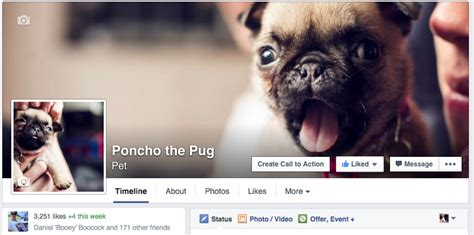 poncho the pug poncho the pug here s a thought