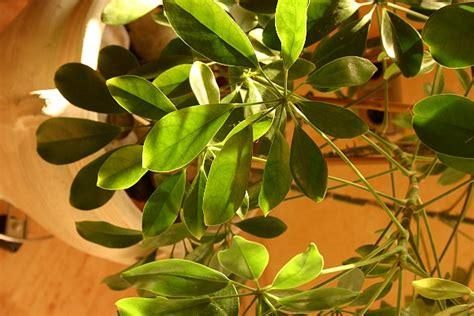 Pflanzen Nach Feng Shui 2440 by Einzigartig At