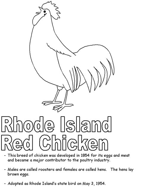 coloring pages of rhode island rhode island red coloring page