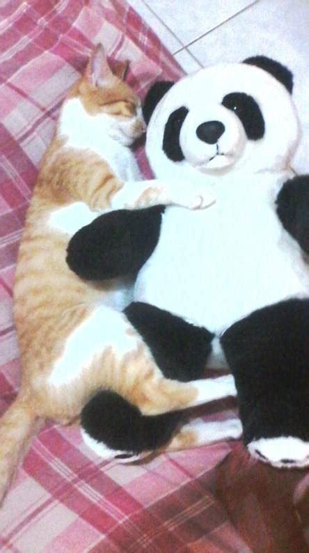 Free Hugs Panda panda wallpapers free by zedge