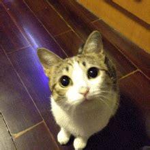 super cute cat gifs emoticons