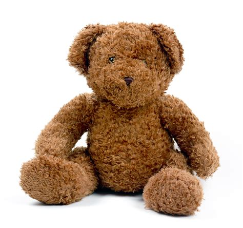 teddy the teddy pictures freaking news