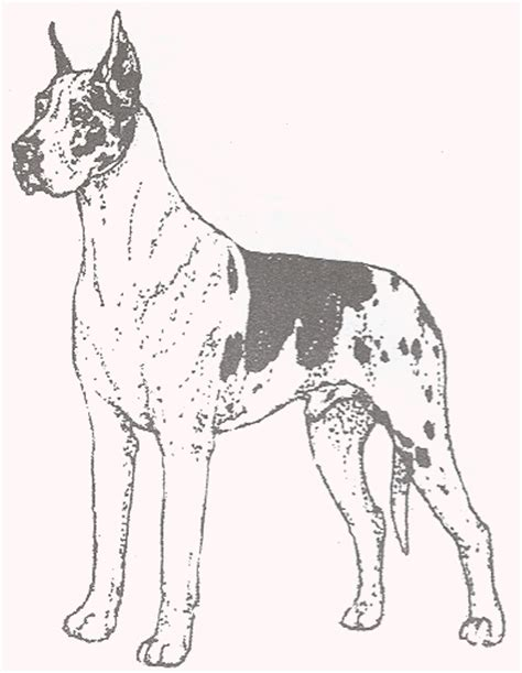 great dane puppy coloring pages coloring pages