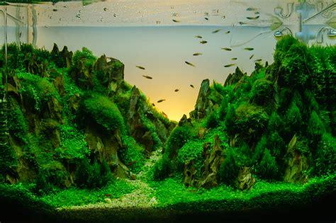 aquascape  aquarium petbarn