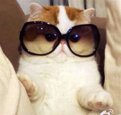 Dog With Glasses Meme - snoopy the cat sunglasses cats cute smile big pinterest cats shades and snoopy