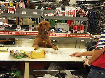 tractor supply puppy quot can i bring my quot the most friendly stores across america rover