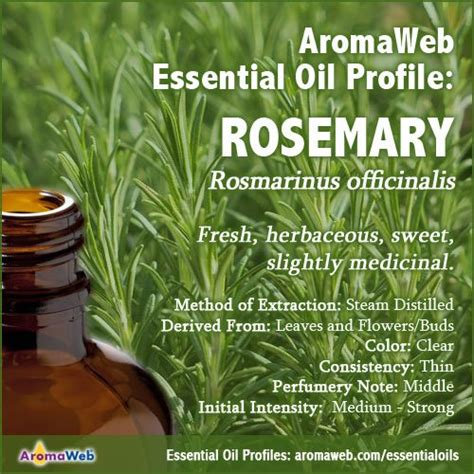 A Brief Profile Of A Few Essential Oils by 37 Best Images About Essential And Absolute Profiles
