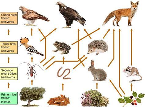 significado de cadenas alimenticias definici 243 n de cadena alimenticia concepto significado y