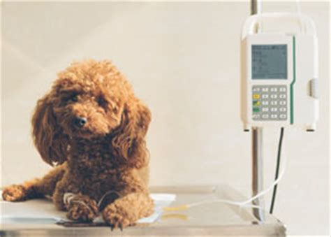 pancreatitis in dogs treatment pancreatitis in dogs endocrine hormones doghealth