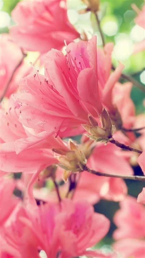 immagini sfondo fiori sfondi fiori 44 immagini