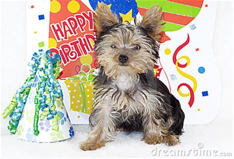 happy birthday yorkie images yorkie birthday clipart clipart suggest