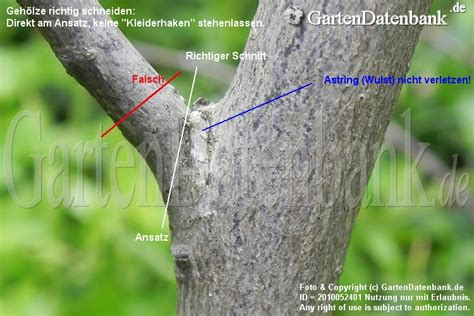 heckenschnitt wann erlaubt bild b 228 ume schneiden baumschnitt obstbaumschnitt