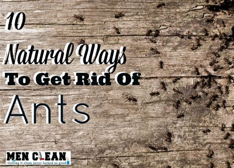 Safe Way To Get Rid Of Ants In Kitchen by 10 Ways To Get Rid Of Ants Menclean