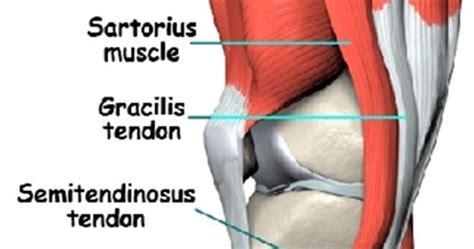 dolore parte interna ginocchio dott leonardo donati medico specialista in ortopedia