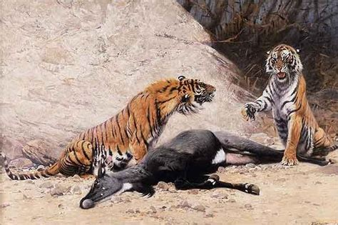 the tigers prey tigers with prey by friedrich wilhelm kuhnert artinthepicture com