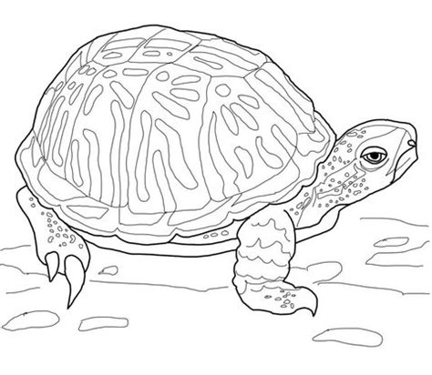 pet turtle coloring page 17 best images about flash the box turtle my class pet