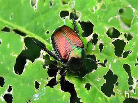 Gardens Pest by Garden Pests