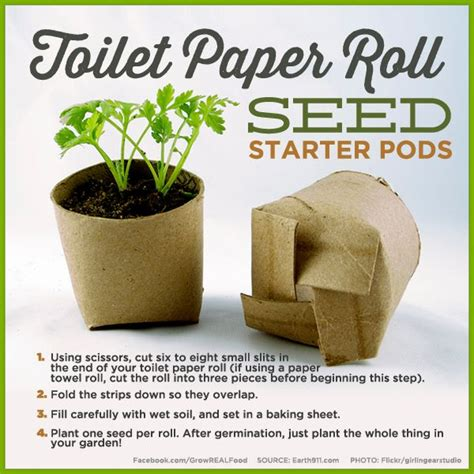 How To Make Starters With Toilet Paper Rolls - toilet paper roll seed starter pods save money by