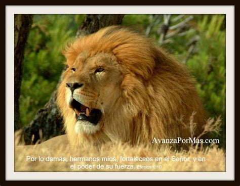 Imagenes Cristianas Leones | imagenes cristianas de leones con leones auto design tech