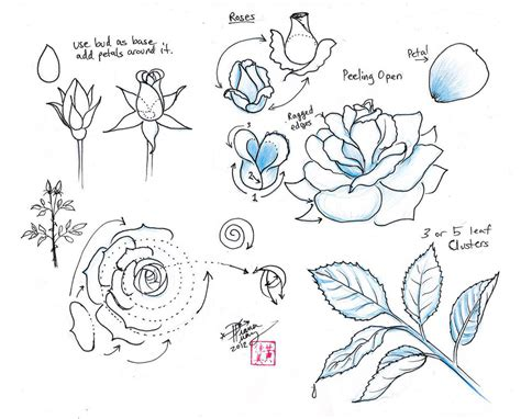 how to draw doodle roses draw roses by diana huang on deviantart