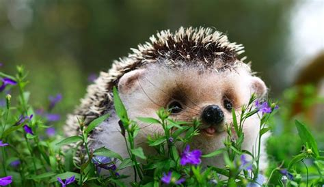 cute baby hedgehog smiling twelve of the cutest baby animals on earth king world news