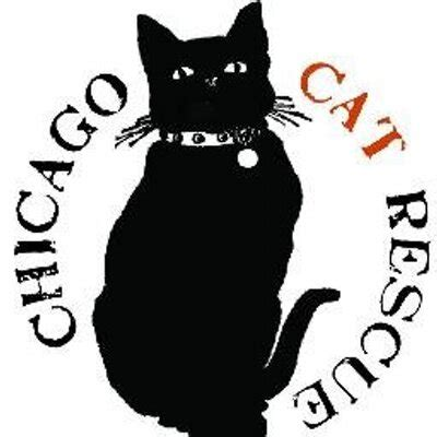 chicagoland rescue chicago cat rescue on quot looking to add a cat to your meet adoptable