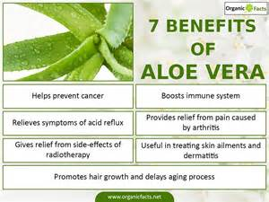 Aloe Vera Facts by 21 Surprising Benefits Of Aloe Vera Organic Facts