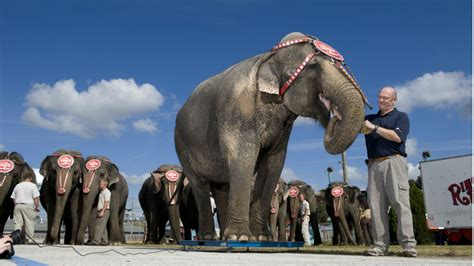 Circus Elephant Rage What The Guff The Strangest News Stories From The Week Of 1 10 Hiv Doctor Injects Himself