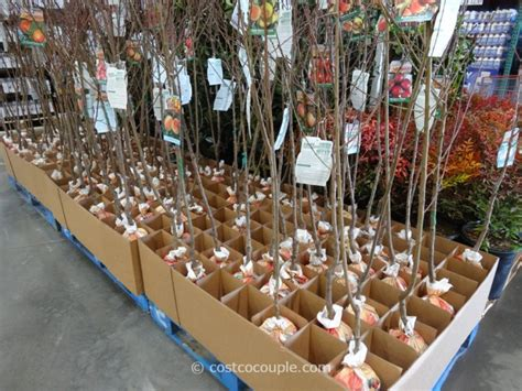 assorted fruit trees - Fruit Trees Bay Area