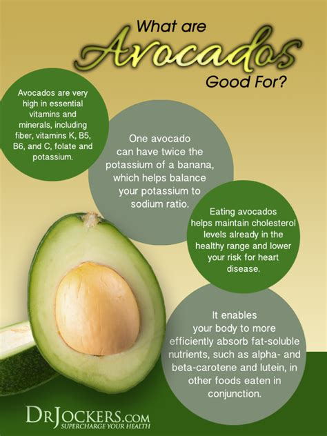 healthy fats other than avocado 3 reasons to eat avocados everyday