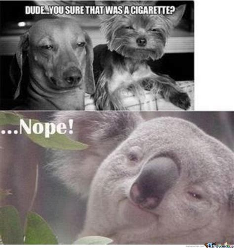 High Koala Meme - high koala meme www pixshark com images galleries with