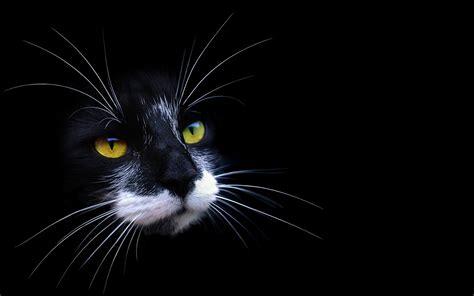 imagenes wallpapers gatos gatos hd im 225 genes wallpapers 10 si te llevas uno