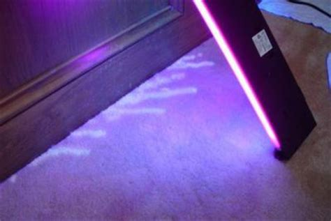 black light to detect cat urine carpet cleaning in boulder co detecting cat