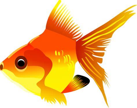 gold fish clip free goldfish clip