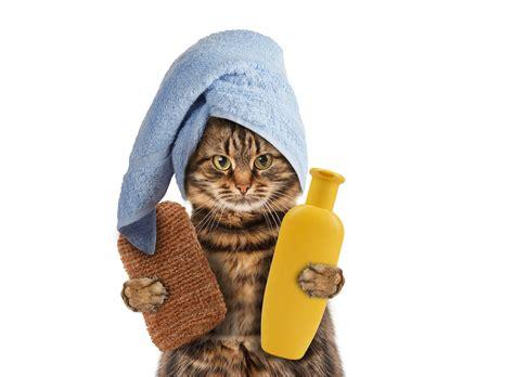 fare in doccia gatto doccia
