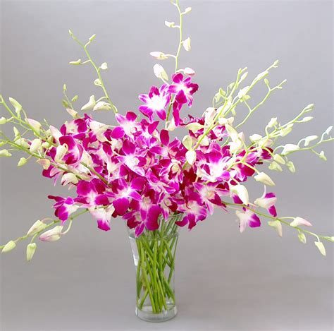 orchid delivery online orchid flower delivery orchidaceous orchid blog
