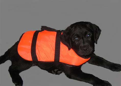 zwemvest met kraag puppycursus en andere hondentrainingen op maat bij 250 thuis
