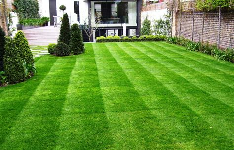 how to grow grass in backyard garden with lawn and planting simon scott landscaping