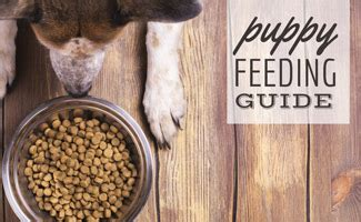 how much food should my puppy eat how much food should i feed my puppy caninejournal