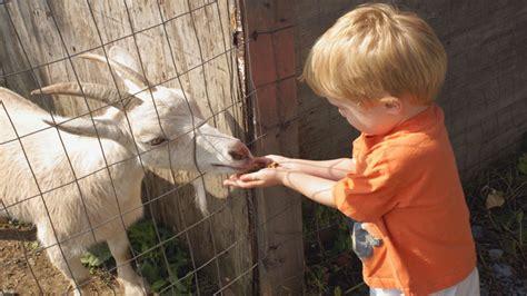 start  petting zoo   start  llc
