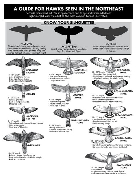 a guide to identifying your home d cor style 837 best images about falconry on pinterest peregrine