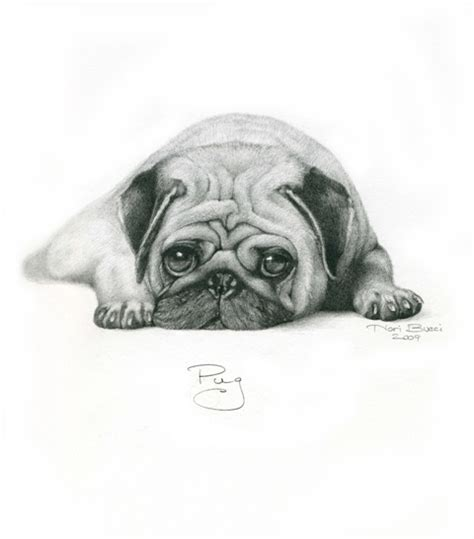 sketch of a pug pug drawing drawing