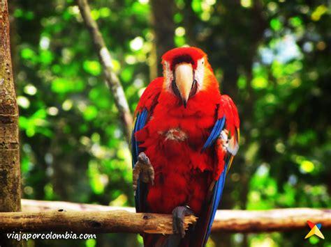 5 Animales Que Deberias Ver by Fauna De Colombia Fotos E Im 225 Genes De Colombia Viaja