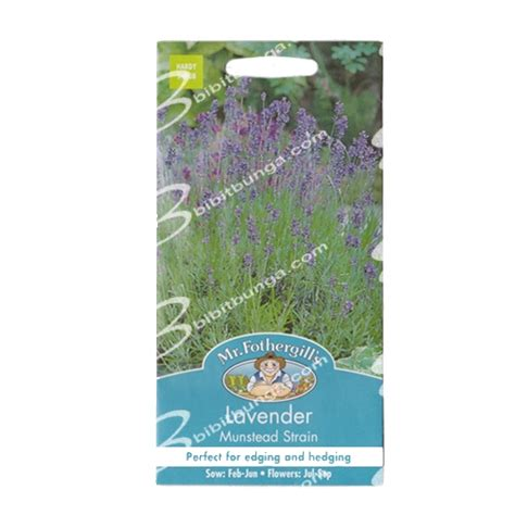 Benih Kacang Panjang Parade Tavi benih lavender munstead strain 150 biji mr fothergills