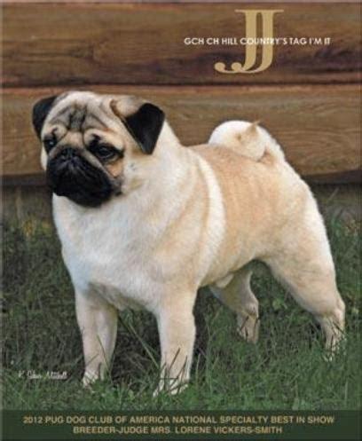 hill country pugs jj