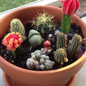Fairy Gardens In Containers - 1000 images about mini cactus garden on pinterest gardens homemade and minis