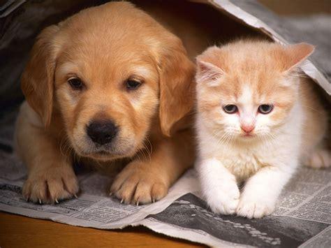 dogs cats housebreaking indoor kitties and doggies mononanimalhospital