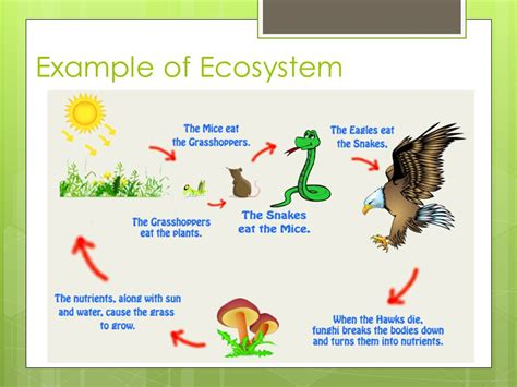exle of ecosystem ecosystems what is ecology ppt