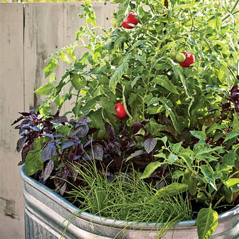 Pot Gardening Vegetables Single Container Vegetable Garden Sunset