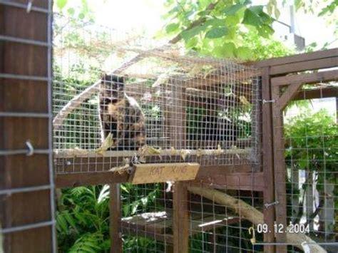 enclosures  cats community concern  cats